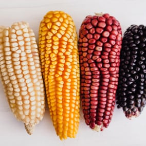 Corn, an ancestral delight